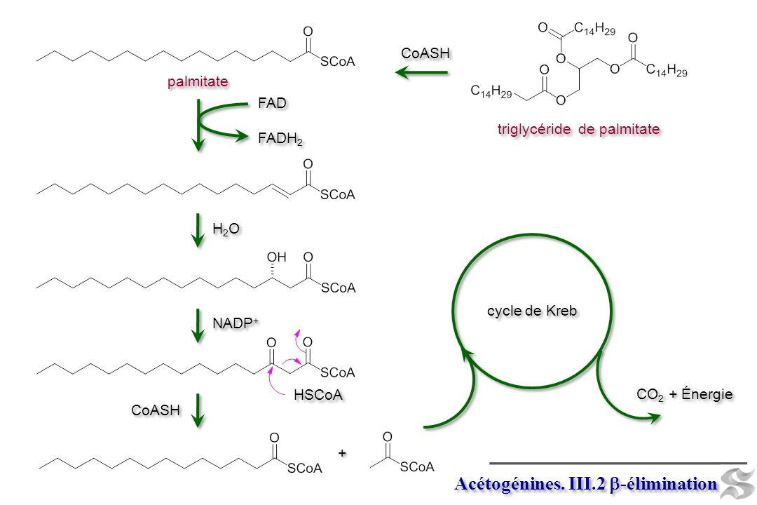 Acétogénines. III.2 b-élimination