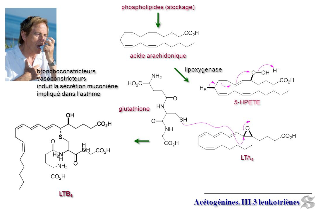 Acétogénines. III.3 leukotriènes