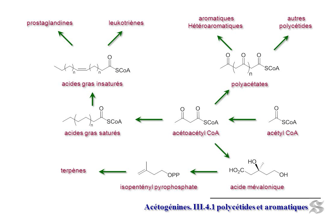 isopentényl pyrophosphate