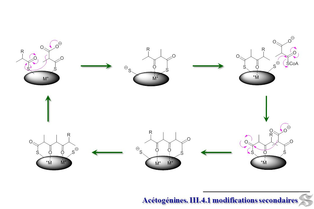 Acétogénines. III.4.1 modifications secondaires