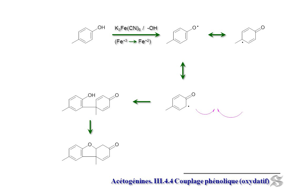 Acétogénines. III.4.4 Couplage phénolique (oxydatif)