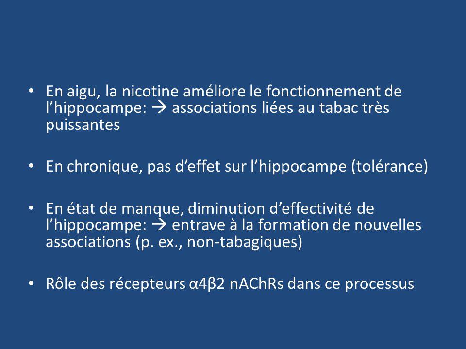 En aigu, la nicotine améliore le fonctionnement de l'hippocampe:  associations liées au tabac très puissantes