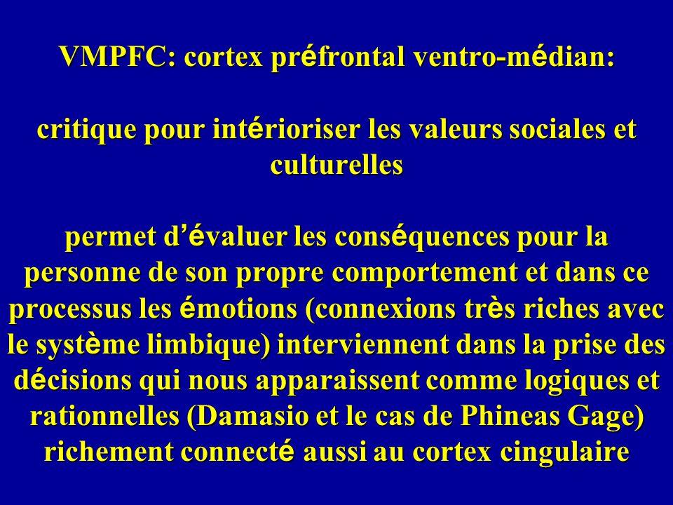 VMPFC: cortex préfrontal ventro-médian: critique pour intérioriser les valeurs sociales et culturelles permet d'évaluer les conséquences pour la personne de son propre comportement et dans ce processus les émotions (connexions très riches avec le système limbique) interviennent dans la prise des décisions qui nous apparaissent comme logiques et rationnelles (Damasio et le cas de Phineas Gage) richement connecté aussi au cortex cingulaire