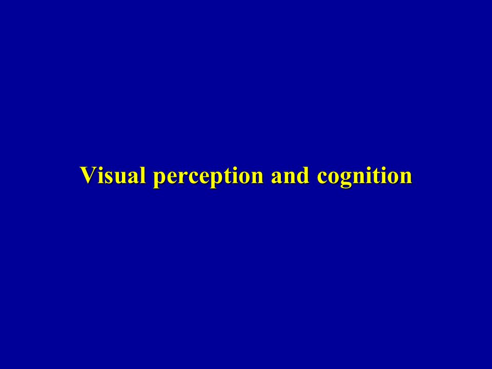 Visual perception and cognition
