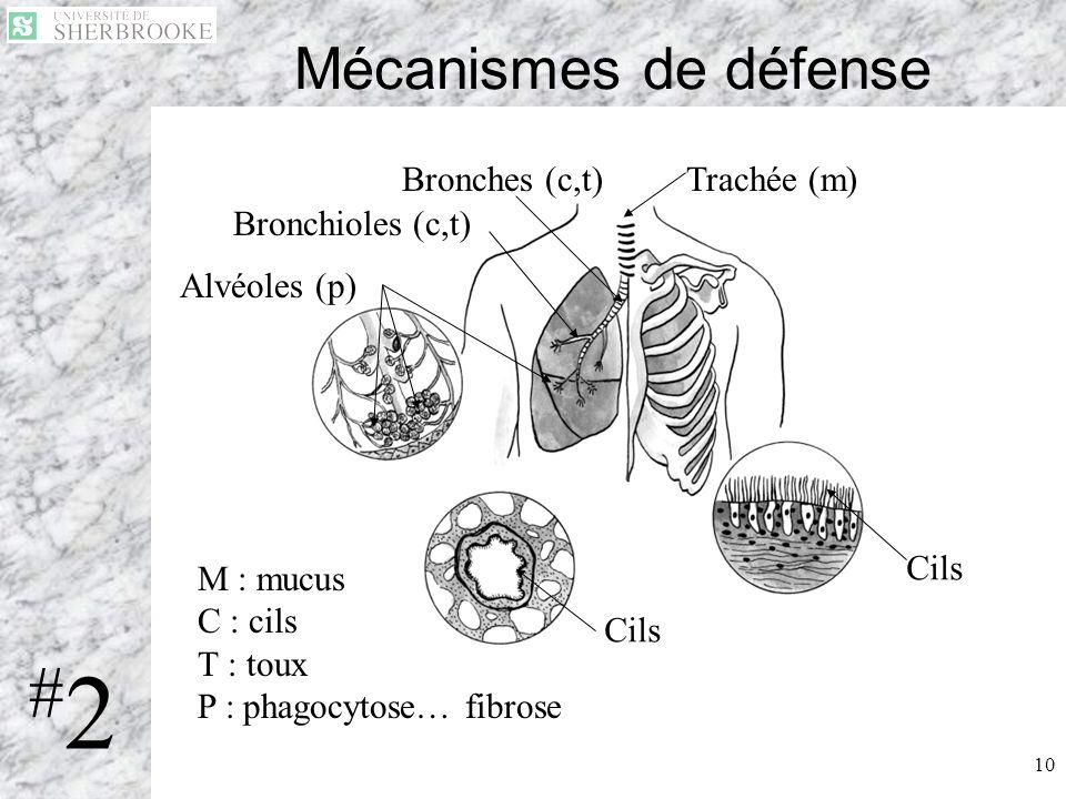 #2 Mécanismes de défense Bronches (c,t) Trachée (m) Bronchioles (c,t)