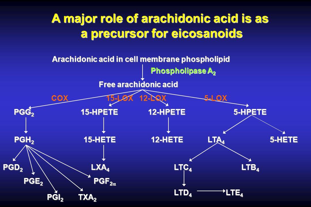 A major role of arachidonic acid is as a precursor for eicosanoids