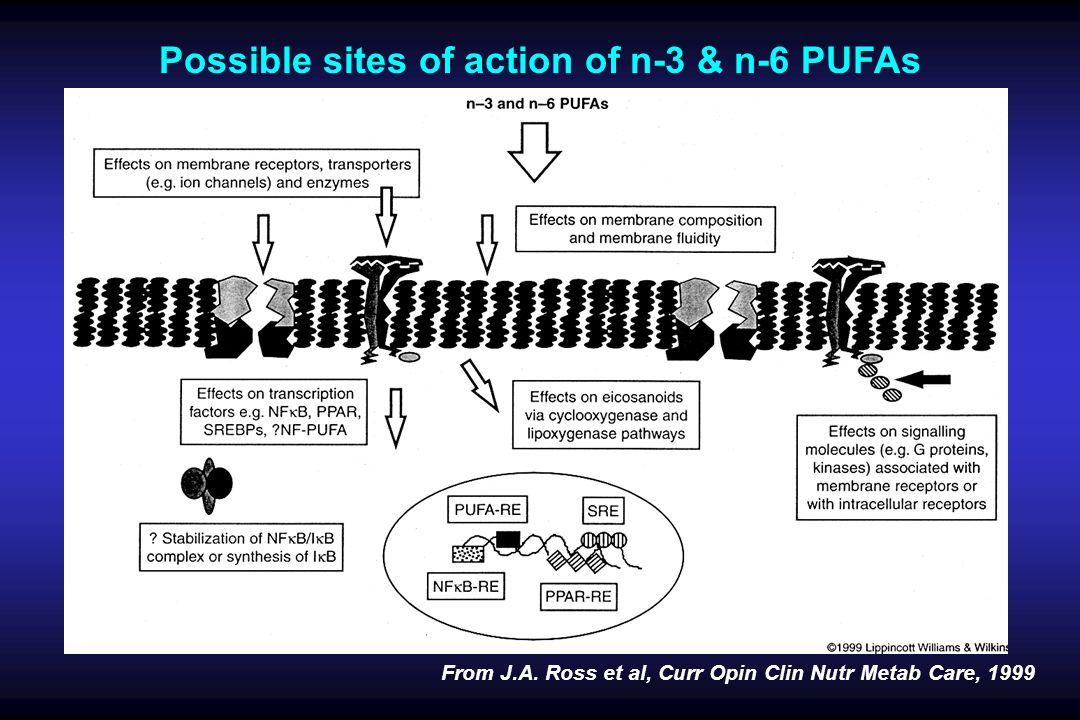 Possible sites of action of n-3 & n-6 PUFAs