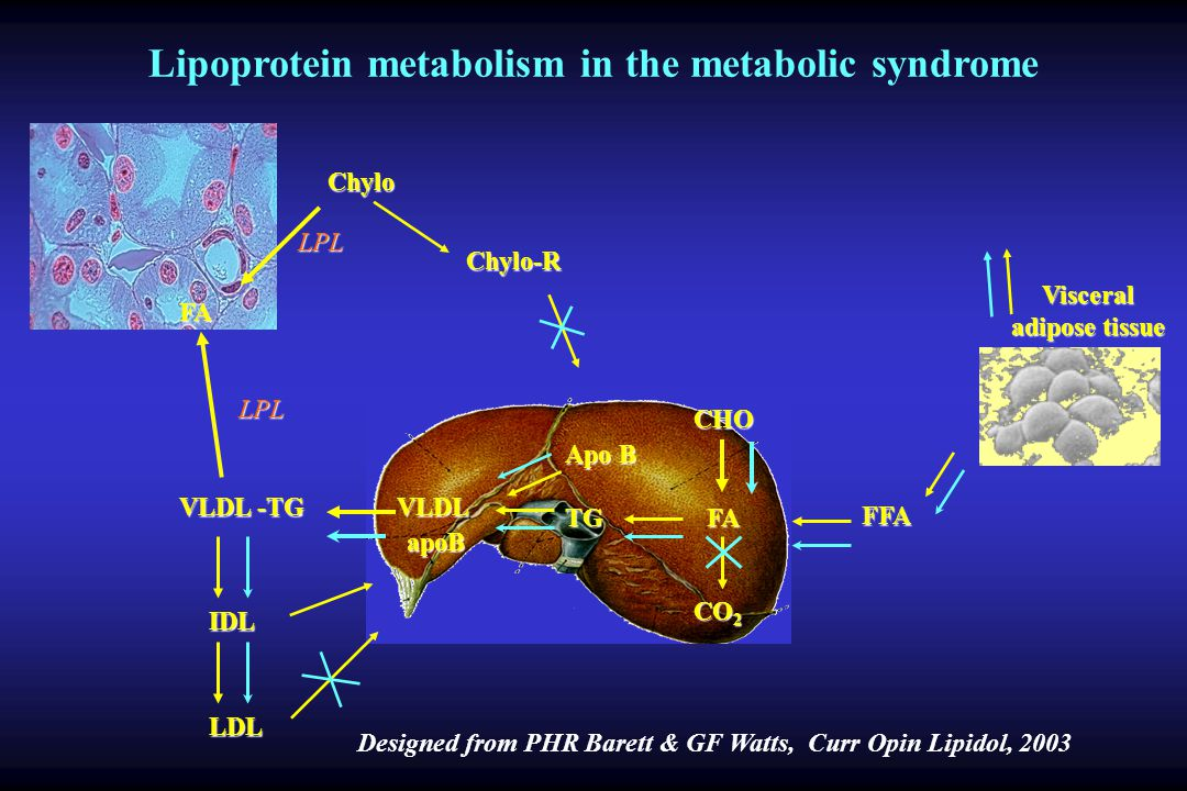 Lipoprotein metabolism in the metabolic syndrome