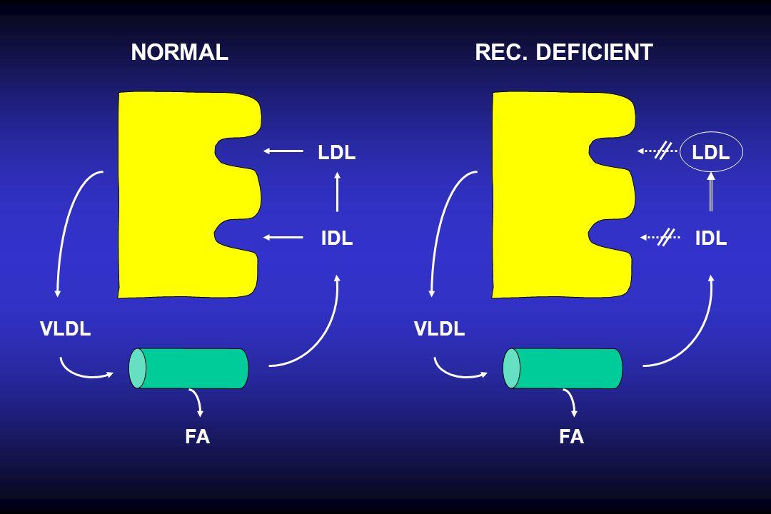 NORMAL REC. DEFICIENT LDL LDL IDL IDL VLDL VLDL FA FA