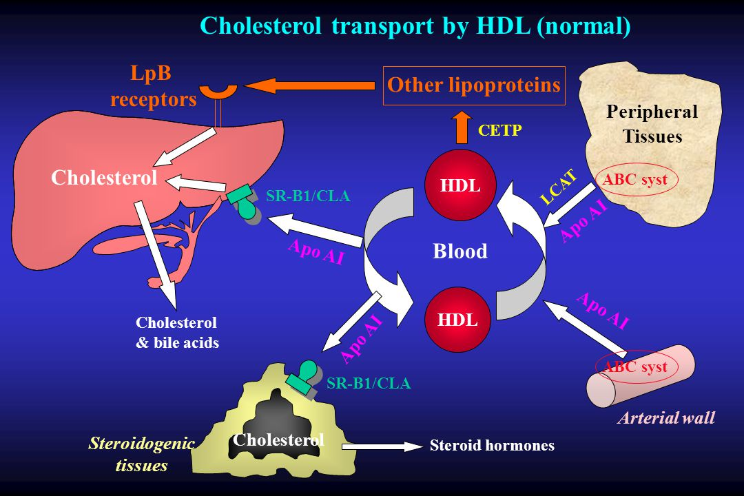 Cholesterol transport by HDL (normal)