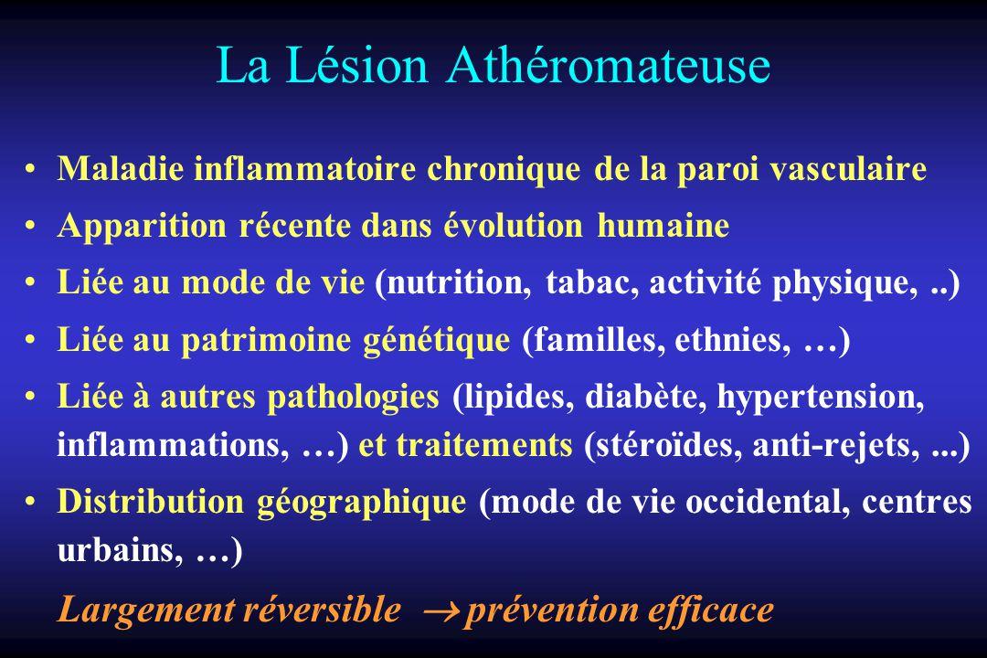 La Lésion Athéromateuse