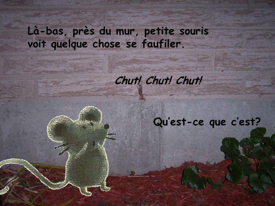 Là-bas, près du mur, petite souris voit quelque chose se faufiler.