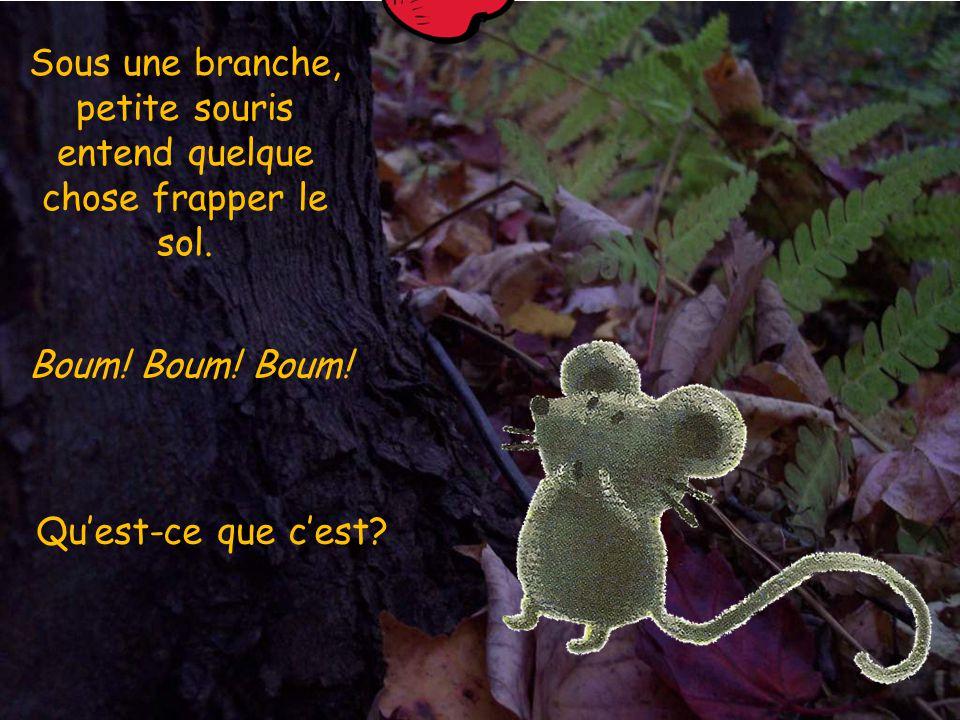 Sous une branche, petite souris entend quelque chose frapper le sol.