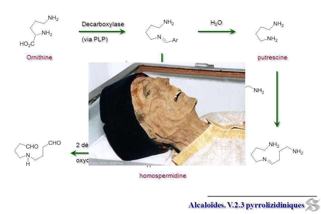 Alcaloïdes. V.2.3 pyrrolizidiniques