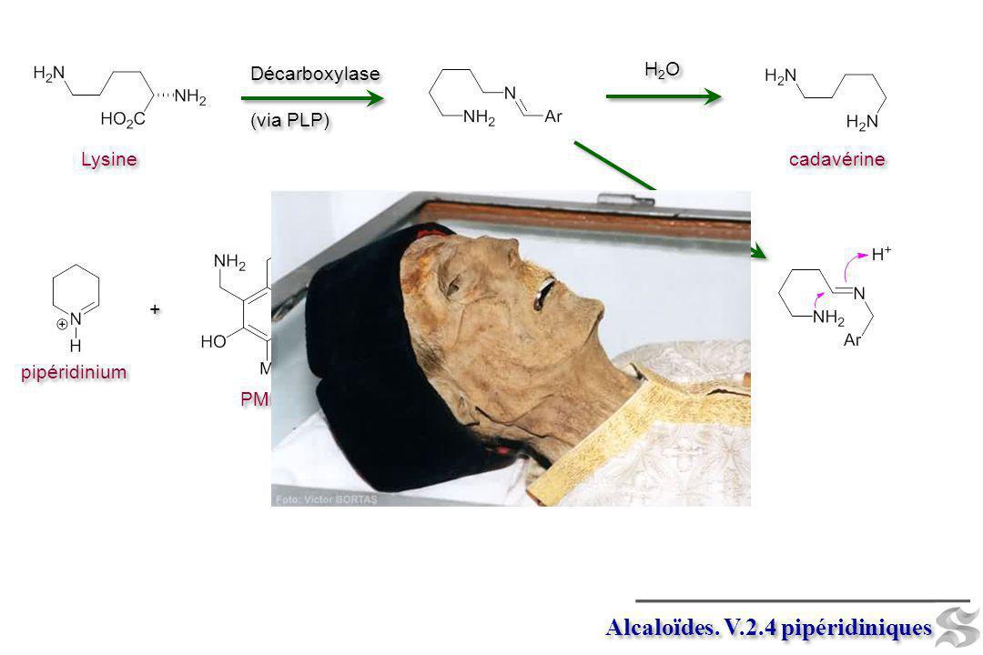 Alcaloïdes. V.2.4 pipéridiniques