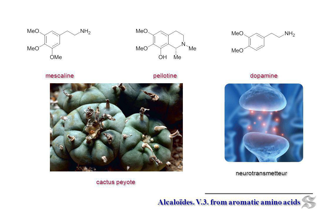 Alcaloïdes. V.3. from aromatic amino acids