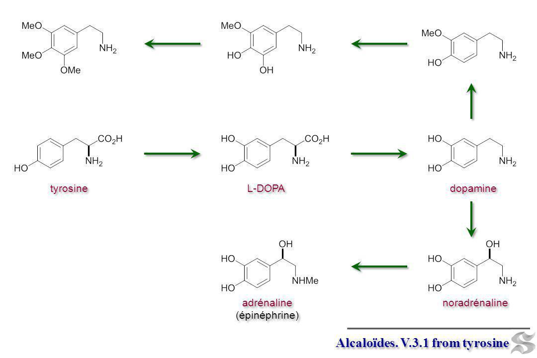 Alcaloïdes. V.3.1 from tyrosine