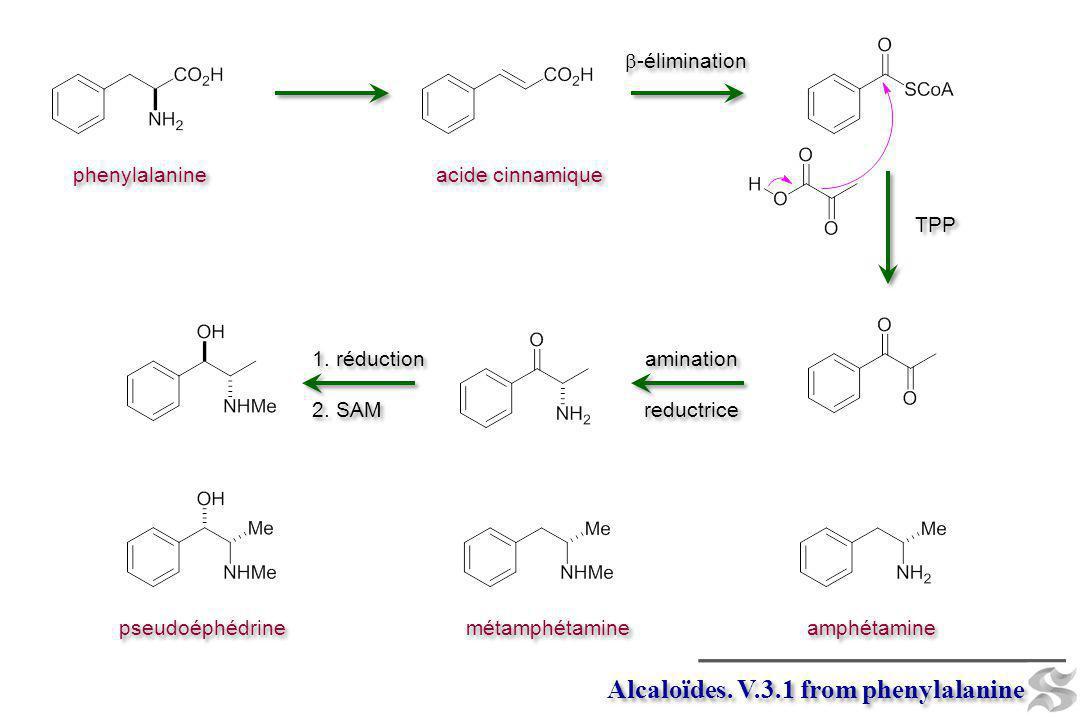 Alcaloïdes. V.3.1 from phenylalanine