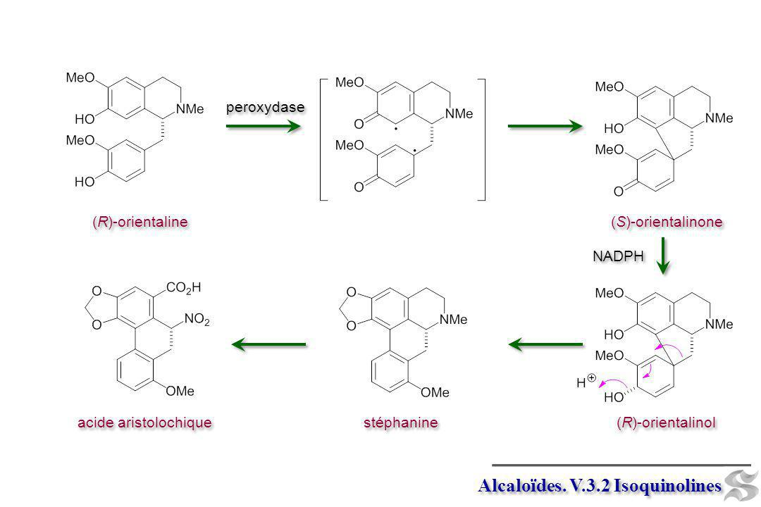 Alcaloïdes. V.3.2 Isoquinolines