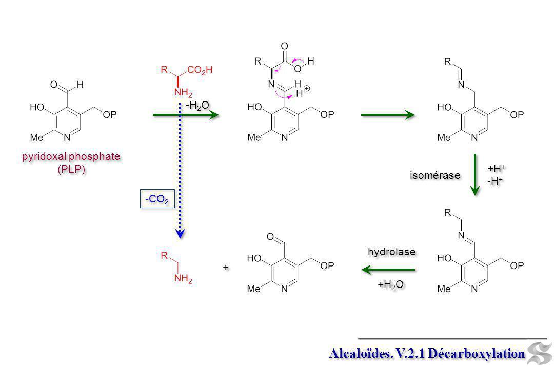 Alcaloïdes. V.2.1 Décarboxylation