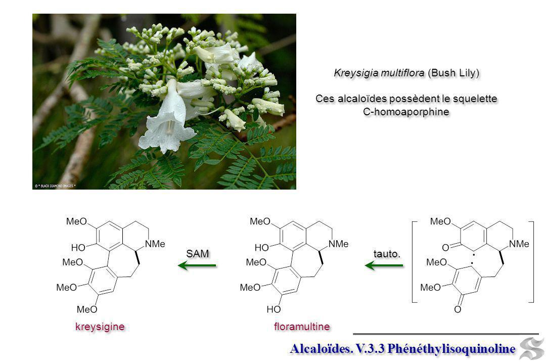 Alcaloïdes. V.3.3 Phénéthylisoquinoline
