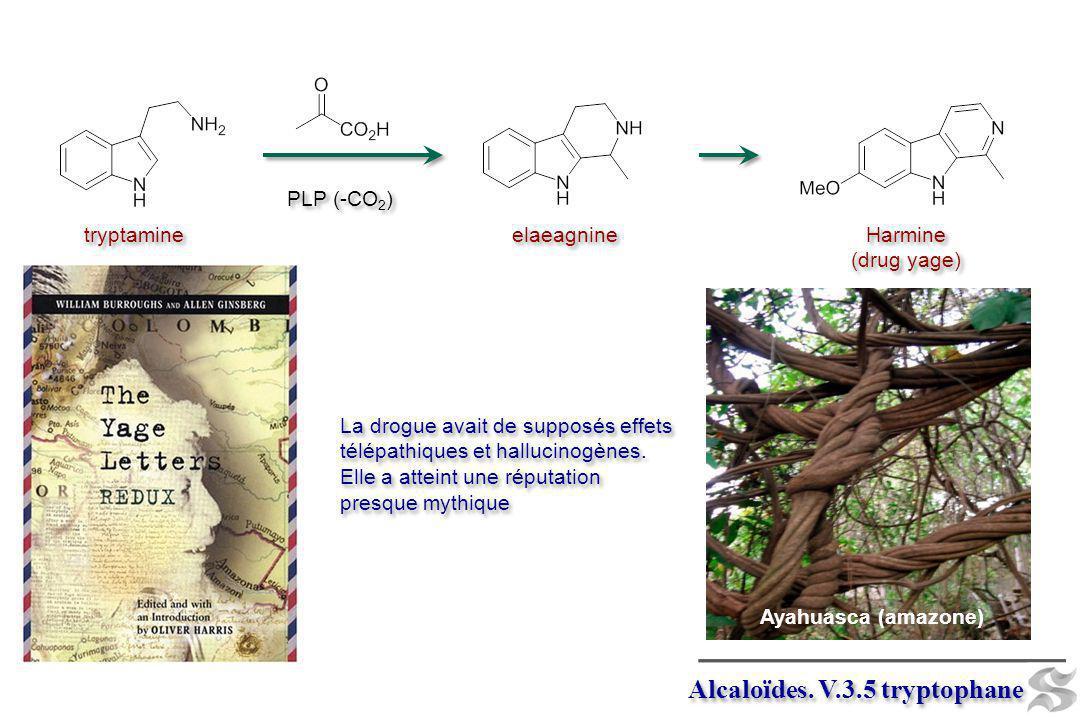 Alcaloïdes. V.3.5 tryptophane