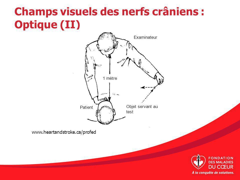 Champs visuels des nerfs crâniens : Optique (II)