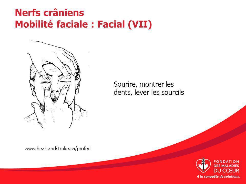 Nerfs crâniens Mobilité faciale : Facial (VII)