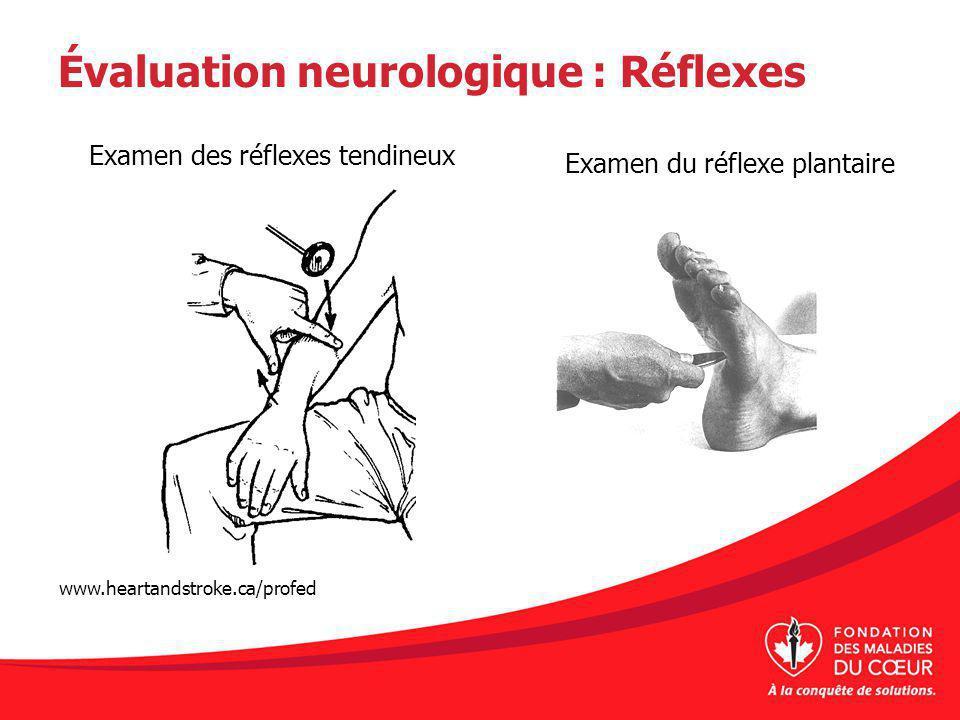 Évaluation neurologique : Réflexes