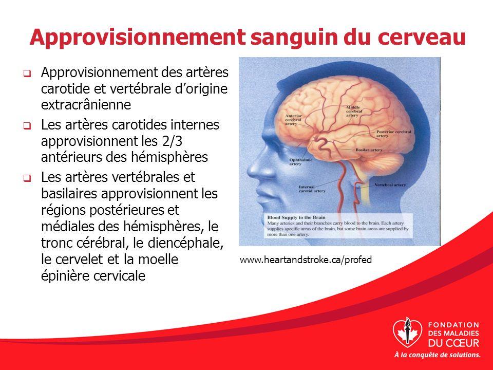 Approvisionnement sanguin du cerveau