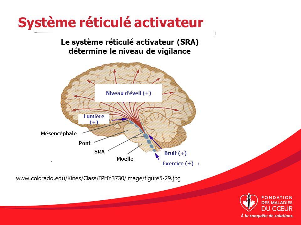 Système réticulé activateur