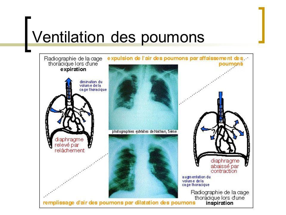 Ventilation des poumons