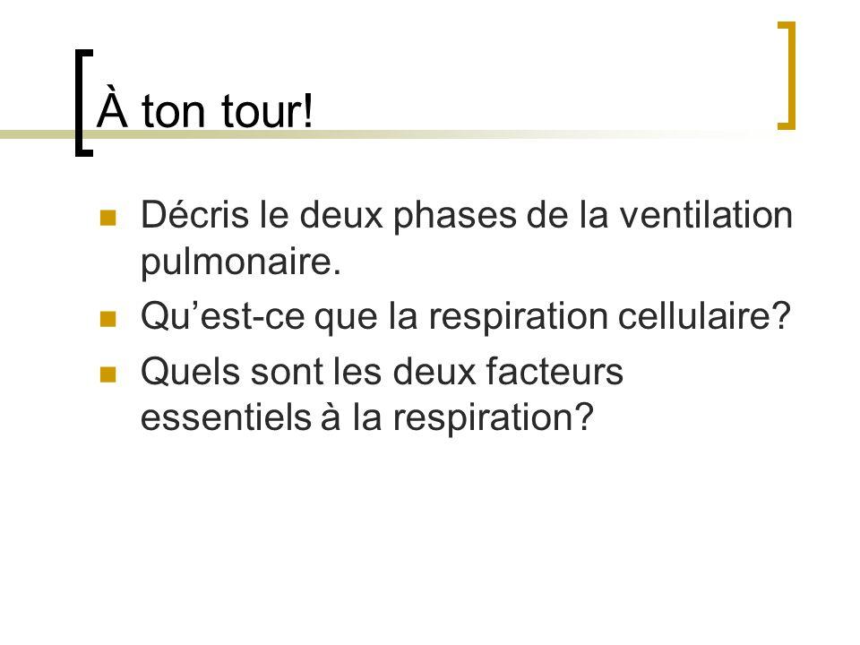 À ton tour! Décris le deux phases de la ventilation pulmonaire.