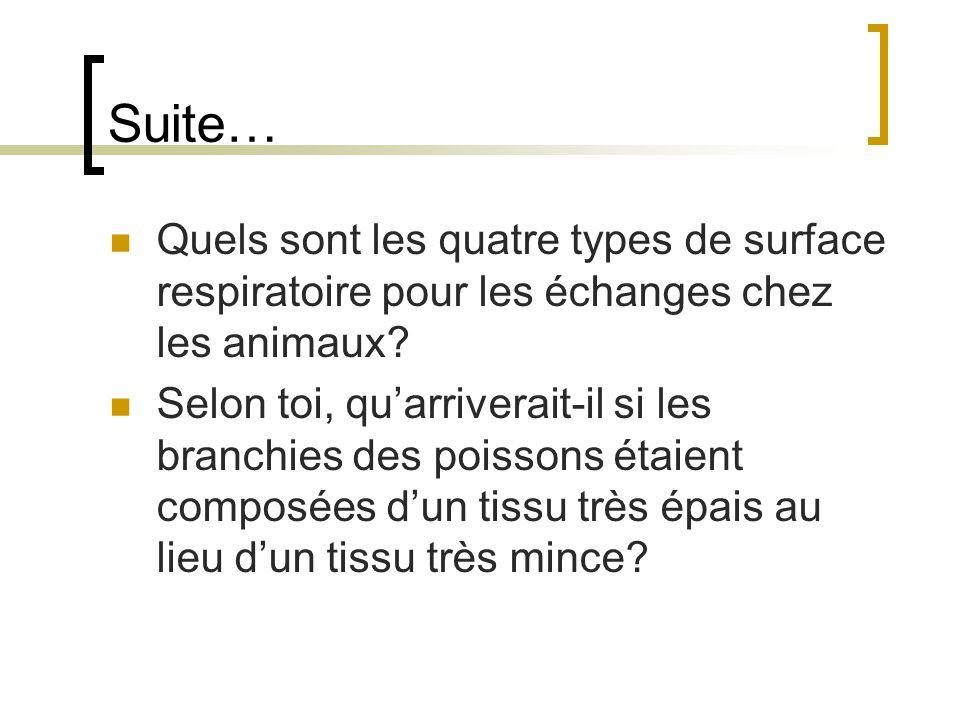 Suite… Quels sont les quatre types de surface respiratoire pour les échanges chez les animaux