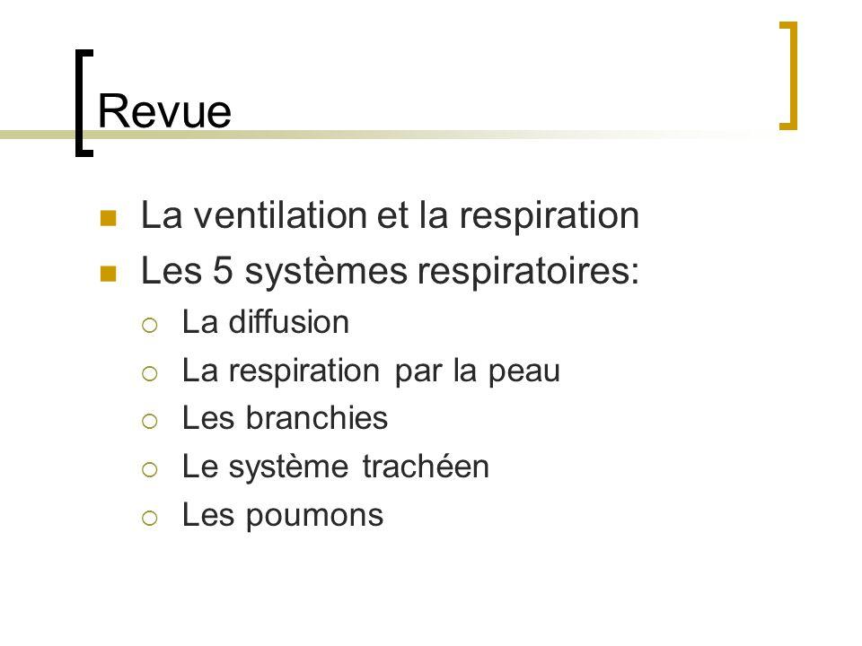 Revue La ventilation et la respiration Les 5 systèmes respiratoires: