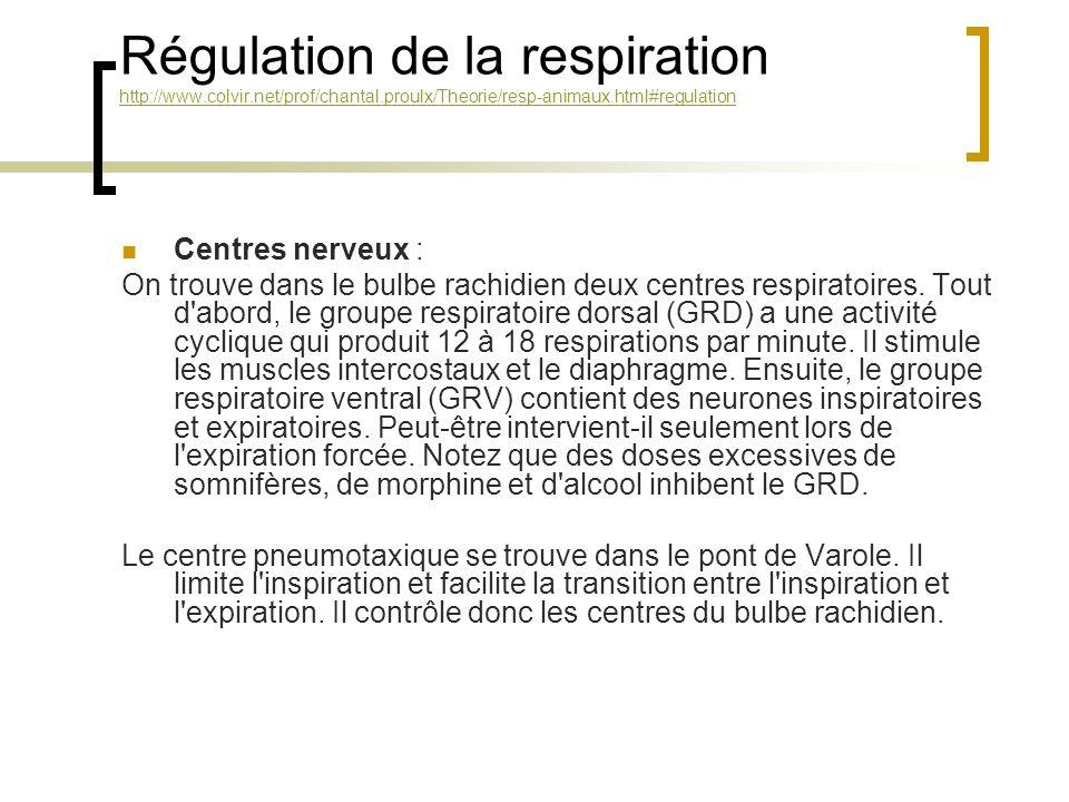 Régulation de la respiration http://www. colvir. net/prof/chantal