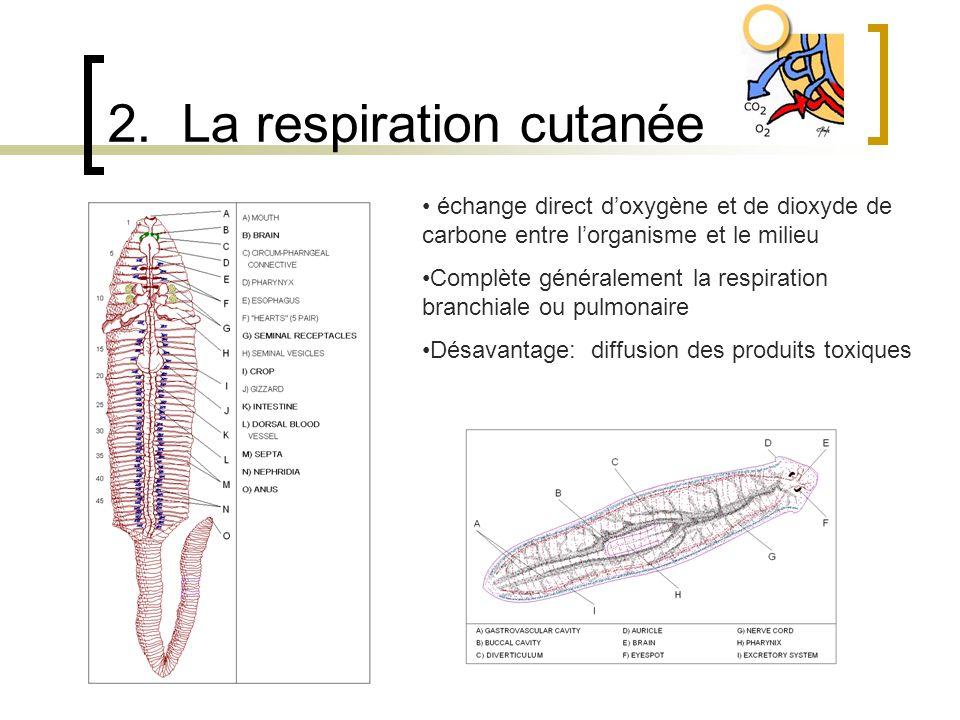 2. La respiration cutanée