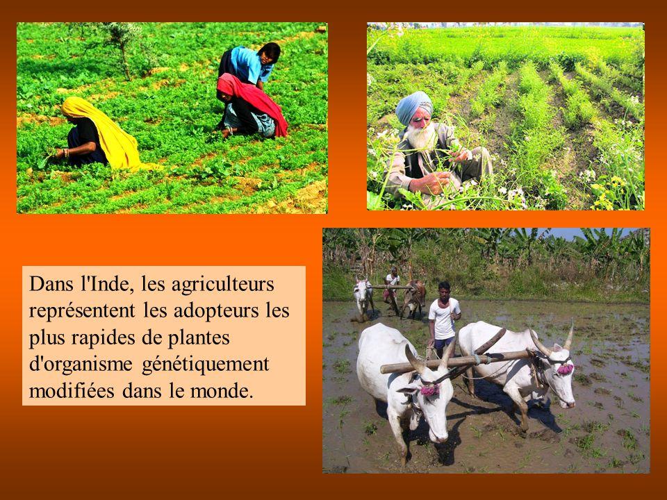 Dans l Inde, les agriculteurs représentent les adopteurs les plus rapides de plantes d organisme génétiquement modifiées dans le monde.