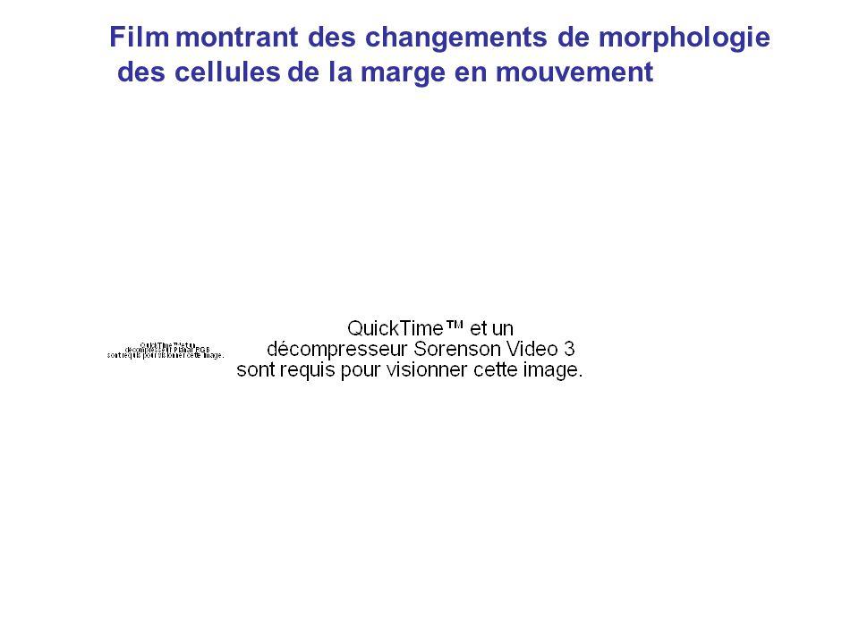 Film montrant des changements de morphologie