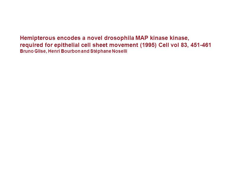 Hemipterous encodes a novel drosophila MAP kinase kinase,