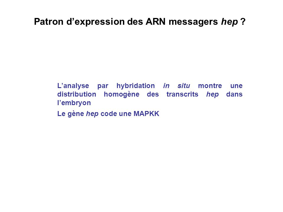 Patron d'expression des ARN messagers hep