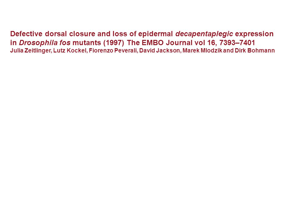 Defective dorsal closure and loss of epidermal decapentaplegic expression in Drosophila fos mutants (1997) The EMBO Journal vol 16, 7393–7401