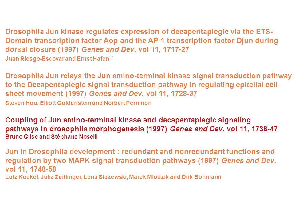dorsal closure (1997) Genes and Dev. vol 11, 1717-27