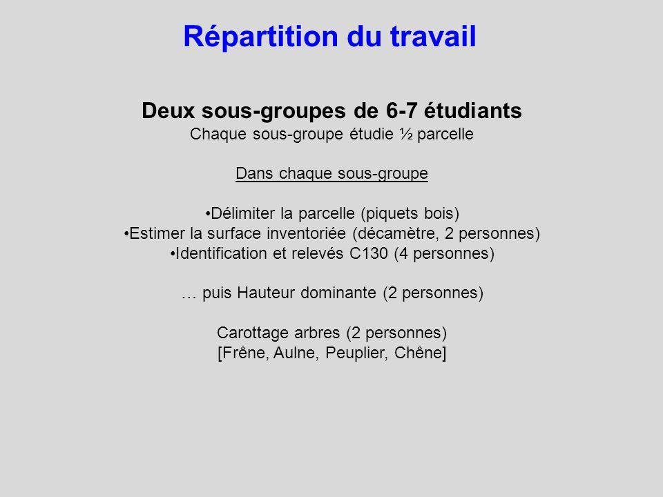 Deux sous-groupes de 6-7 étudiants