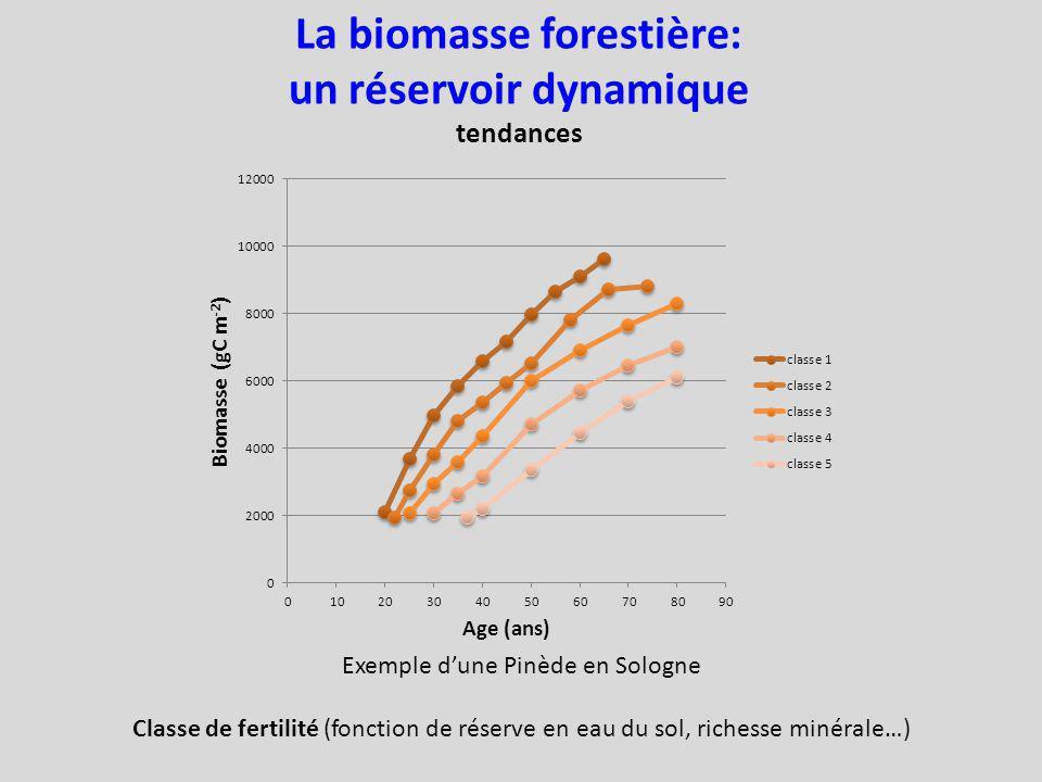 La biomasse forestière: un réservoir dynamique
