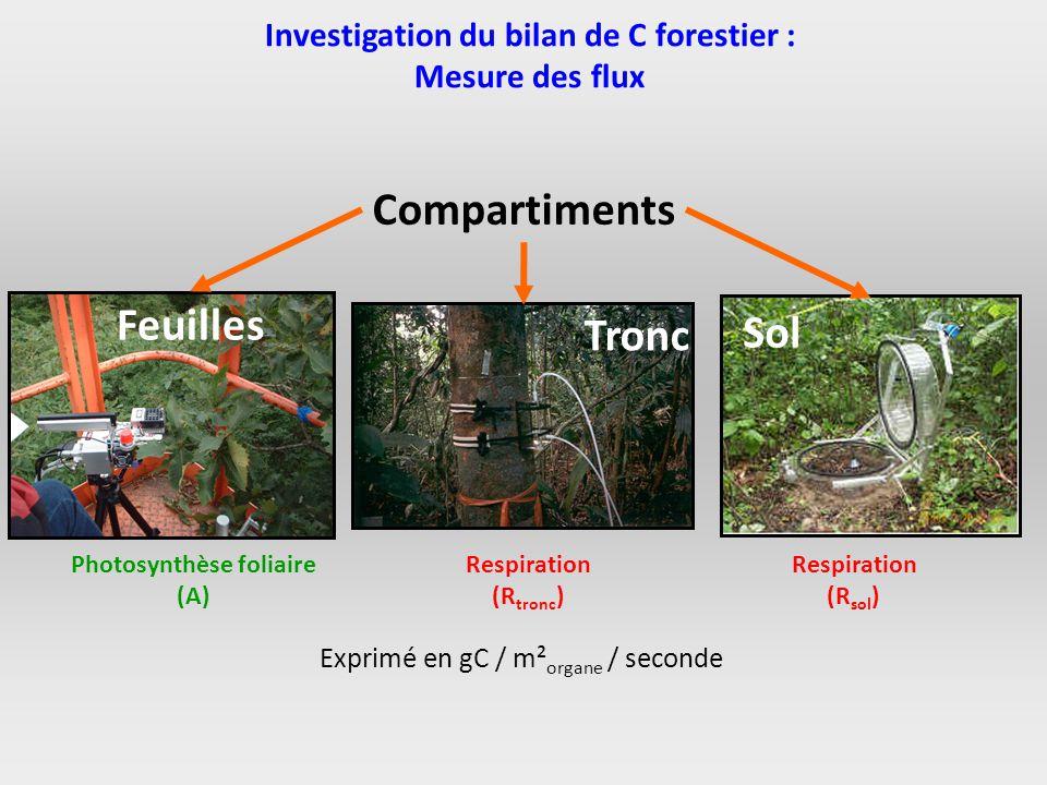 Investigation du bilan de C forestier : Photosynthèse foliaire (A)