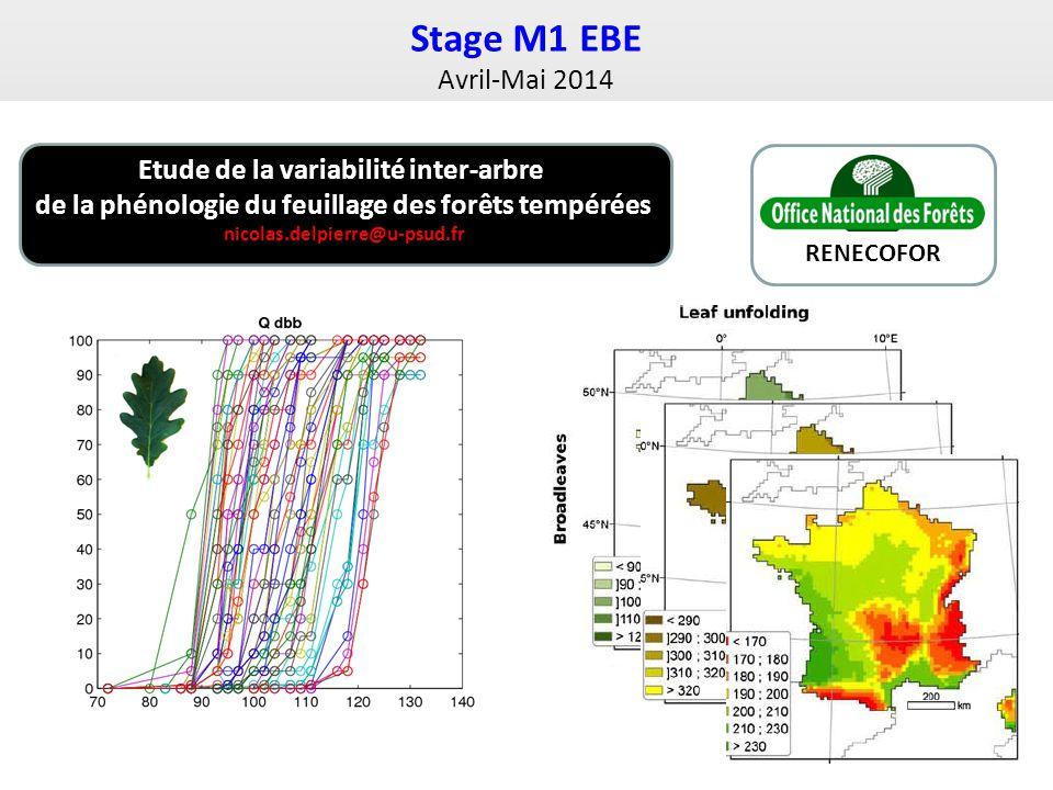 Stage M1 EBE Avril-Mai 2014 Etude de la variabilité inter-arbre