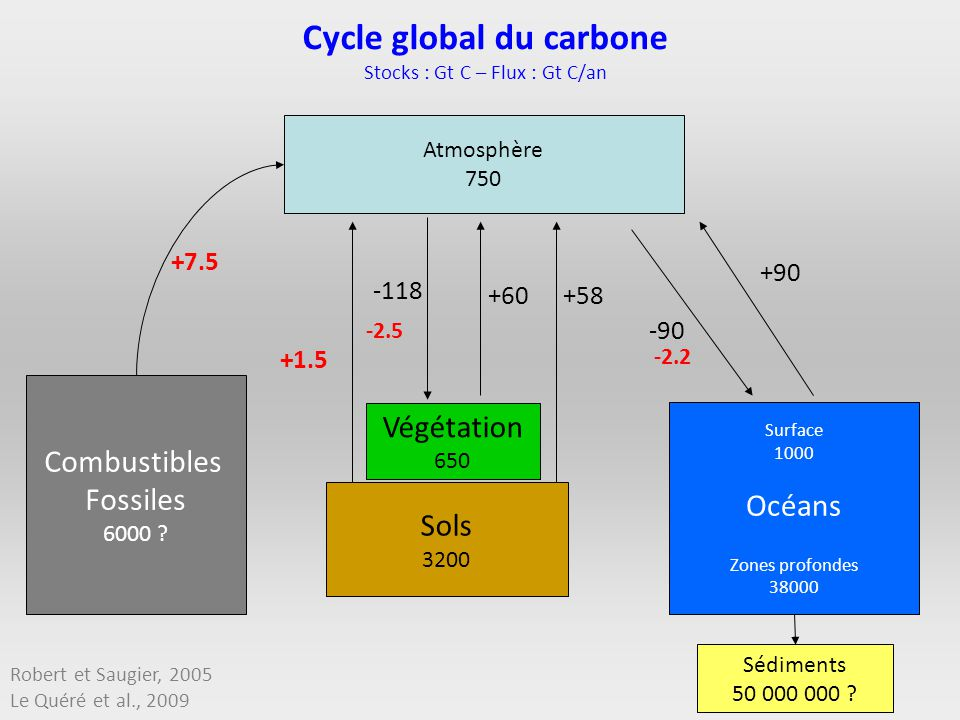 Cycle global du carbone