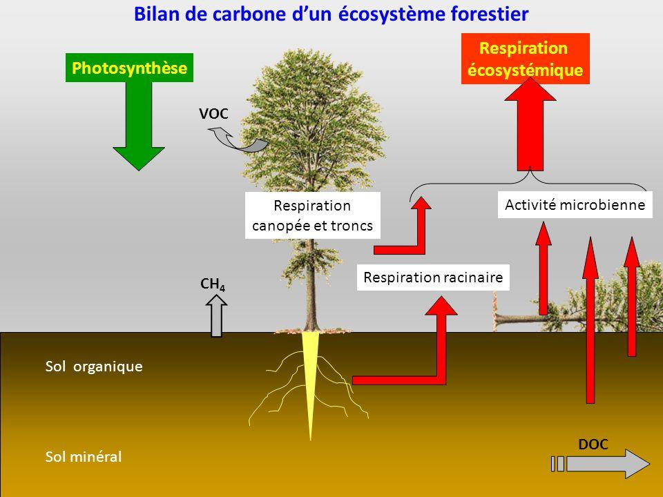 Bilan de carbone d'un écosystème forestier