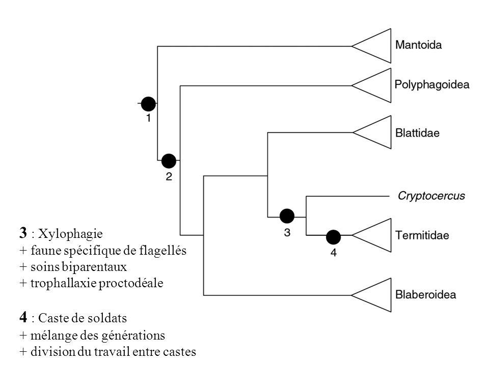 3 : Xylophagie 4 : Caste de soldats + faune spécifique de flagellés